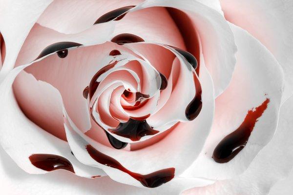 RoseCottage3